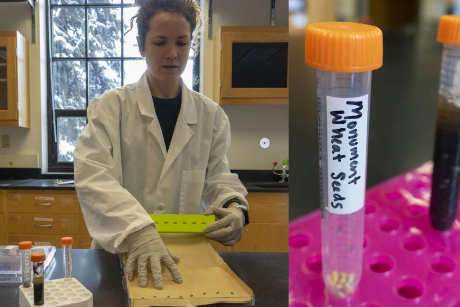 """CORINNE WALSH SETS UP AN EXPERIMENT TO  EXPLORE THE RELATIONSHIP BETWEEN MICROBES AND WHEAT PRODUCTION (L PANEL). THE THREE VIALS CONTAIN A DRY DIRT SAMPLE, A DIRT SAMPLE MIXED WITH WATER, AND THE WHEAT SEEDS THAT WALSH THEN APPLIES THE WET DIRT """"SLURRY"""" TO (R PANEL)."""