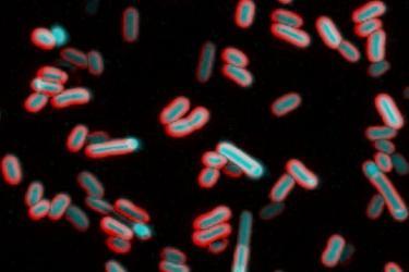 Kralj Lab microscopy image of bacteria