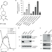 Identification and characterization of molecules that inhibit Notch signaling.