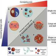 Microgels provide numerous design parameters that can be tuned for various cell culture applications