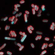 Bacteria microscope image