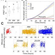 Nutritional Zn2+ levels influence cell proliferation and intracellular Zn2+ levels.