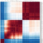 Heatmap showing unsupervised clustering of a Pearson correlation matrix (120 brain, placenta, and visceral yolk sac samples) from expression data (TPM), confirming the expected developmental relationship.