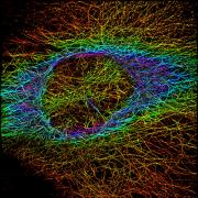 Microscopy image taken by Katie Heiser