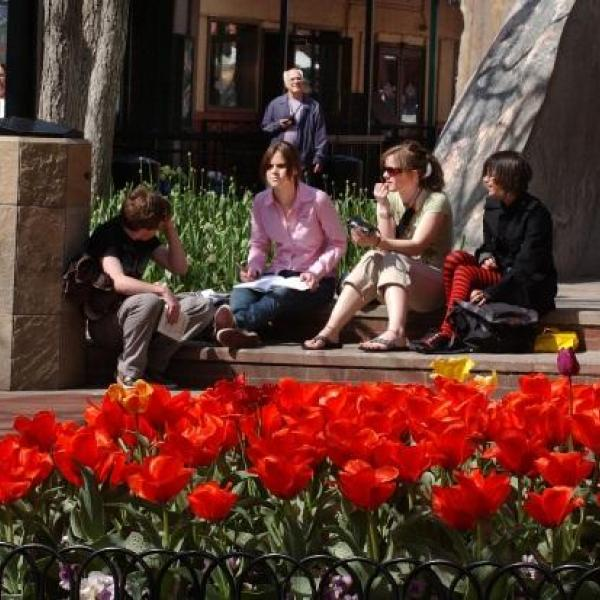 Downtown Boulder - Tulips