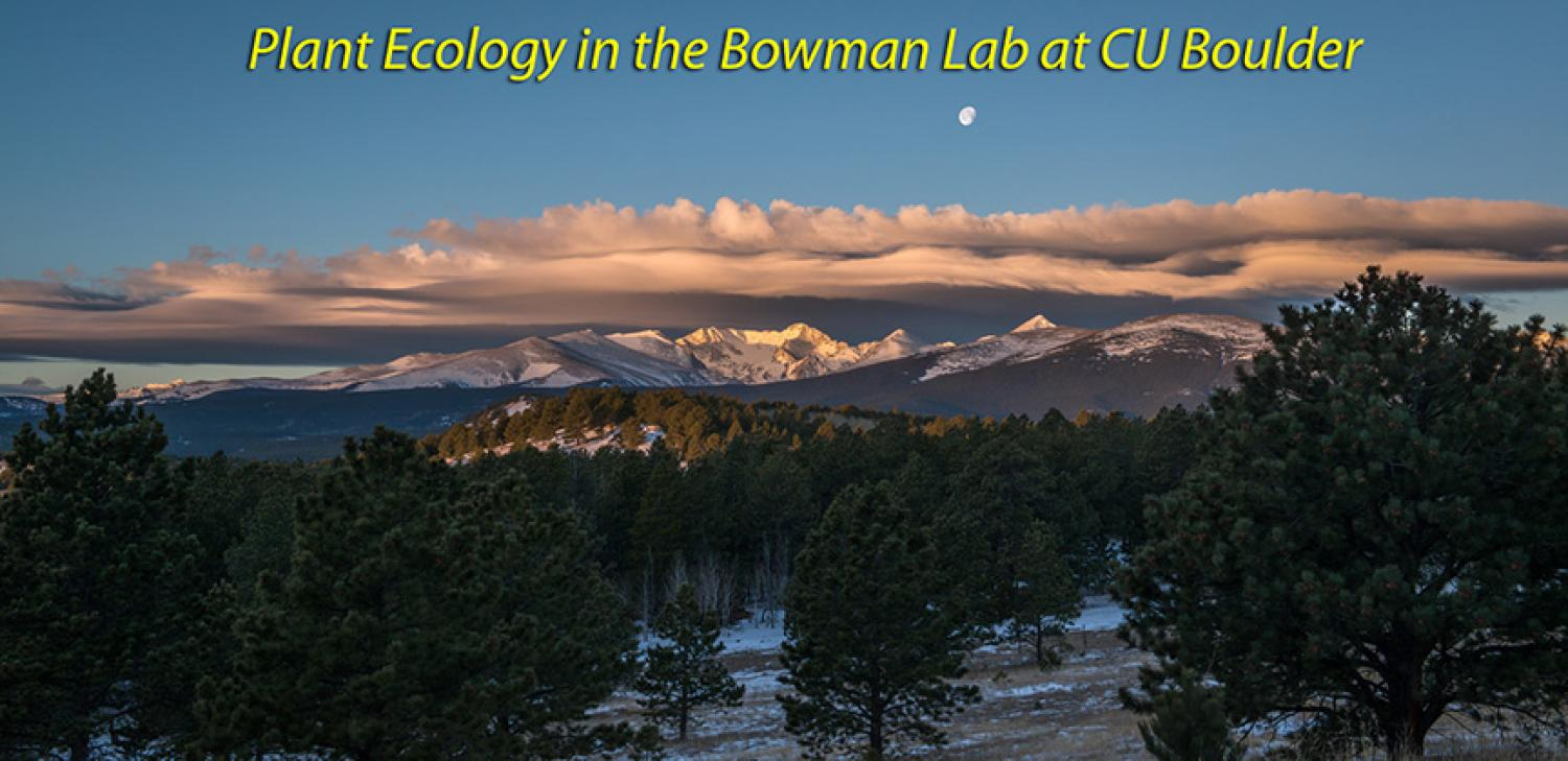 Plant Ecology in the Bowman Lab