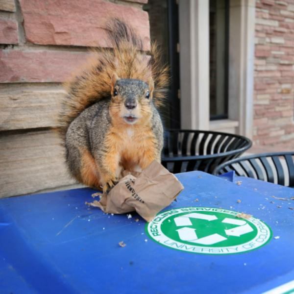 Squirrel on a recycling container on campus. Look for unusual situations that will yield memorable images.