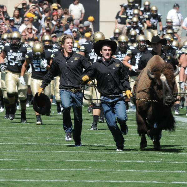 Ralphie and her runners lead the team onto Folsom Field.