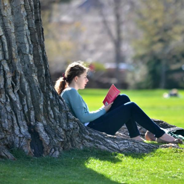 Student studies under a tree in the quad. Beautiful backlighting in this image.