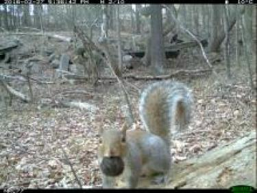 camera trapped squirrel