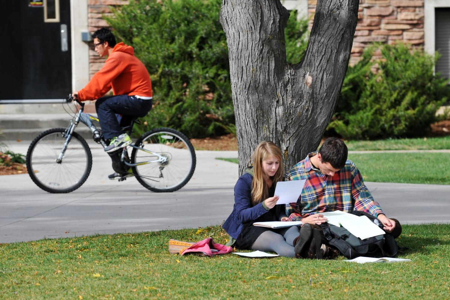 Two students studying outside under a tree.