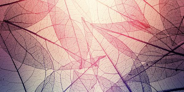 CESR program challenge texture image