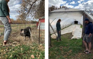 CURE Farm MBA Blog