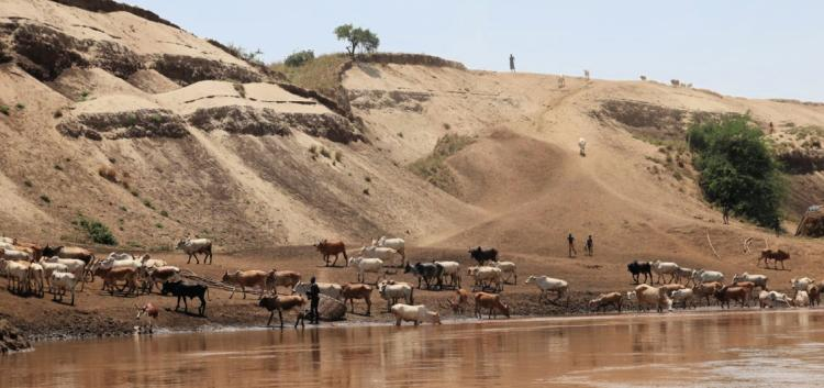 Omo river with people and livestock drinking