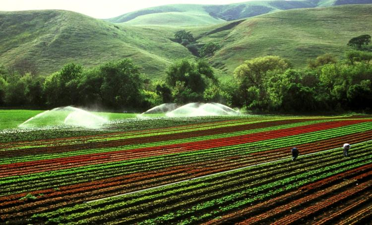 a farm field being irrigated