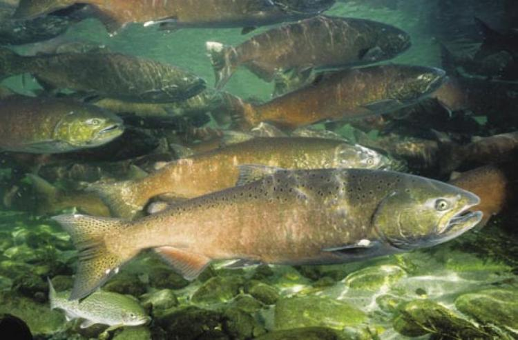 school of fish swimming in a river
