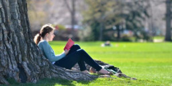 Student reading under a tree