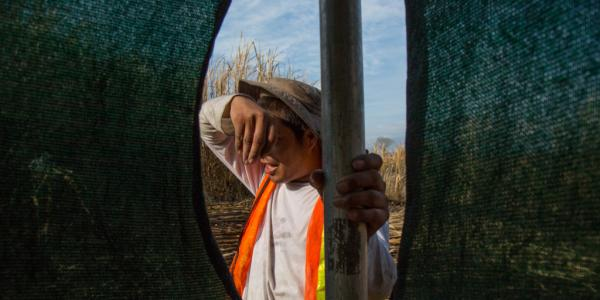 Kevin Alfonso Alas Enriquez wipes sweat from his brow as he holds a shade tent in a sugarcane field