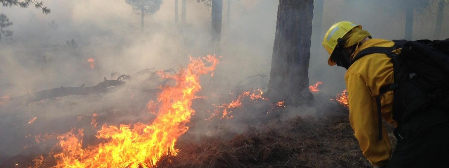 A firefighter works on the scene of a forest fire.