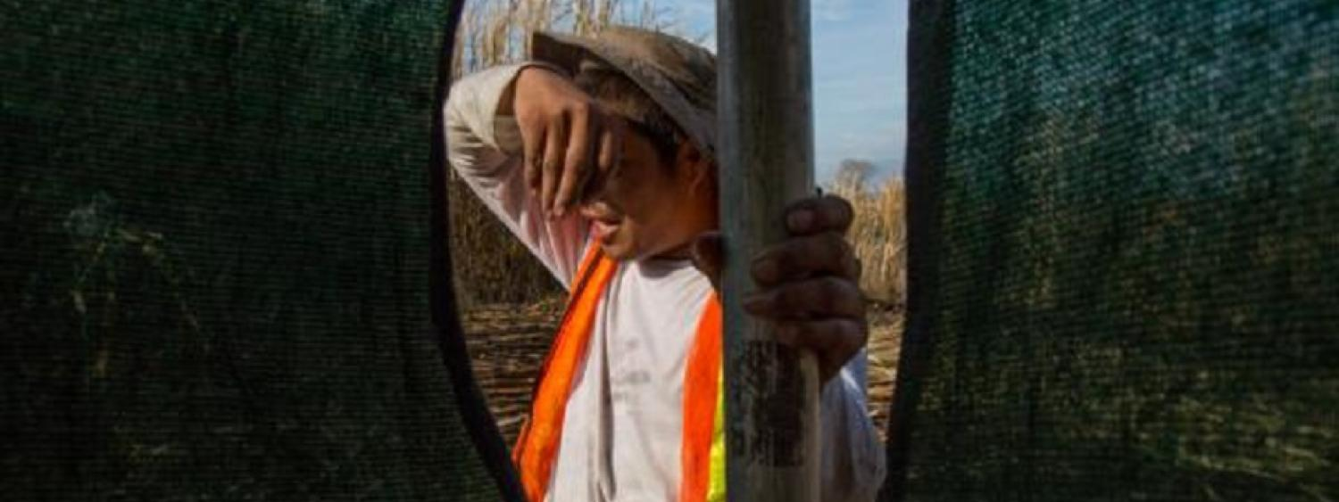 A man wipes his brow while holding a shade screen in a field.