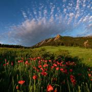 The Flatirons with poppies.