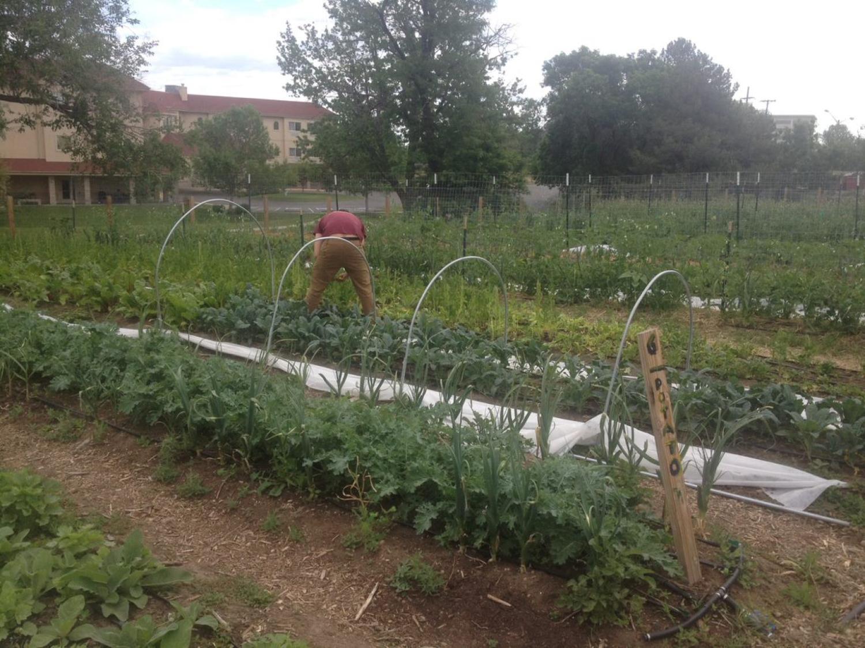 Sister Garden