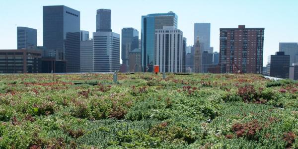 A green roof in Denver.