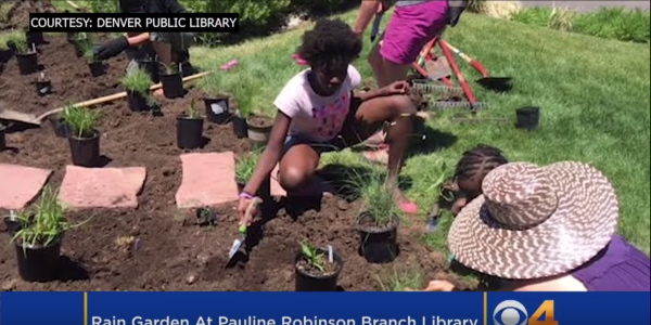 Volunteers plant a rain garden at the Pauline Robinson Library in Denver.