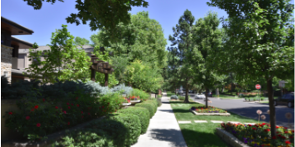 An example of a residential streetscape in Denver