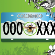 Graphic of what a bee pollinator license plate might look like
