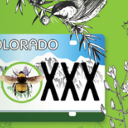 A drawing of a bee by a Colorado license plate