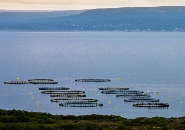 Understanding the Debate over POPs in Norwegian Farmed Salmon