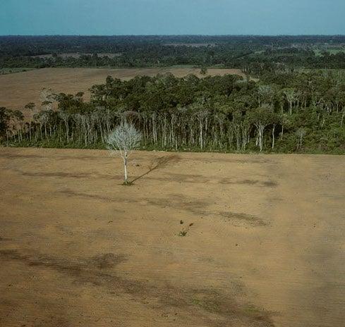 Last of the Amazon
