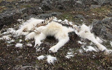 Whispers of Ecological Change in the Arctic Are Trying to Tell Us Something. Are We Listening?