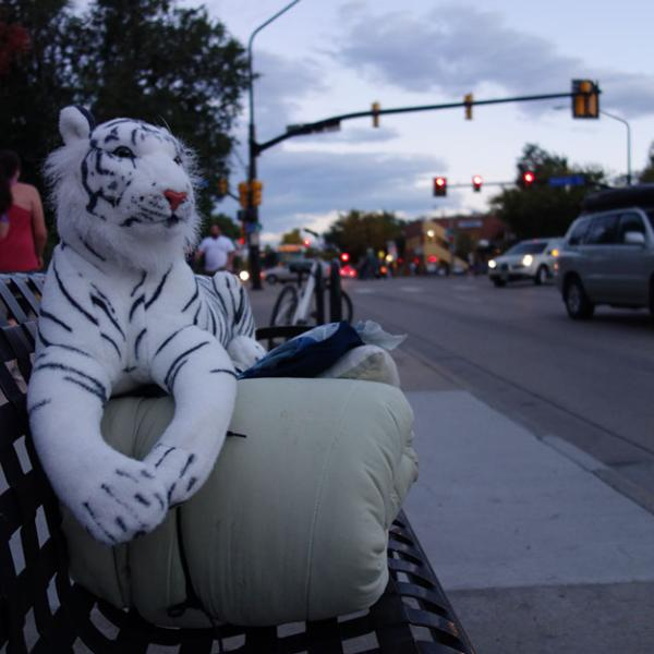 A stuffed white tiger sits on a bedroll on a bench next to a city street