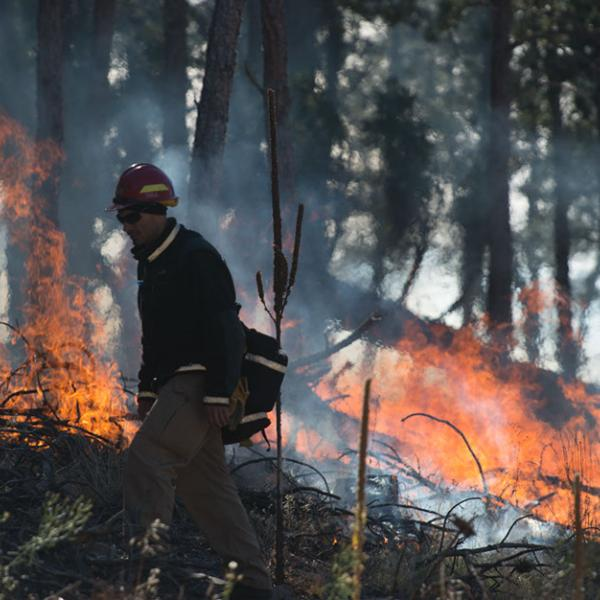A firefighter walks the perimeter of a controlled fire. There are flames and smoke.