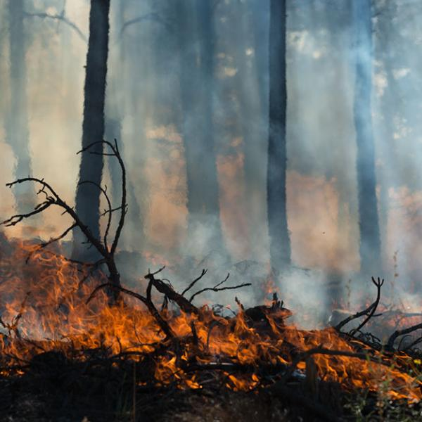 Small bright orange flames burning ground debris in a forest with thick smoke