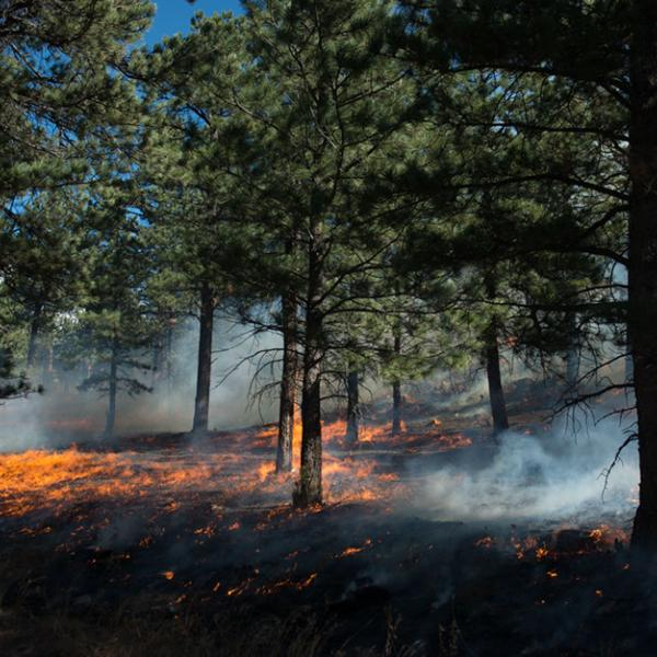 Heil Ranch controlled fire with smoldering ground and patches of fire in the forest