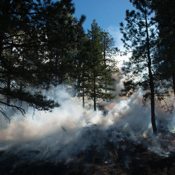 Smoke rising up from smoldering ground against a bright blue sky