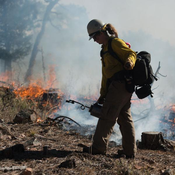 A firefighter starting to build a fire line with a flame thrower