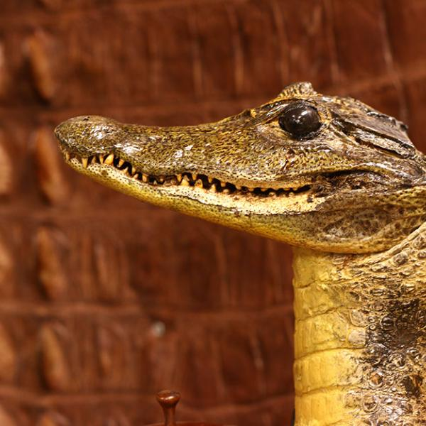 Alligators and crocodiles made into a variety of products that are illegal to bring into the United States are stored at the U.S.F.W.S. Wildlife Product Repository in Commerce City, CO.