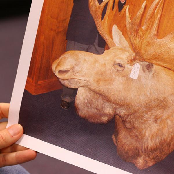 A special agent with the U.S. Fish and Wildlife Service shows a photo from a wildlife crime investigation.
