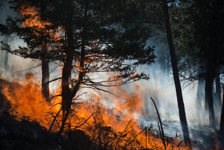 Fire Deficit May Trigger Fiercer Wildfires by Tom Yulsman, photos by Michael Kodas | Scientific American