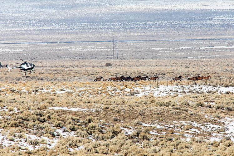 A plan to curb wild horses, and save the West