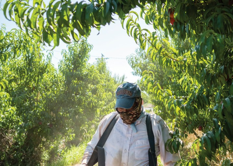 Farmworkers face illness and death in the fields
