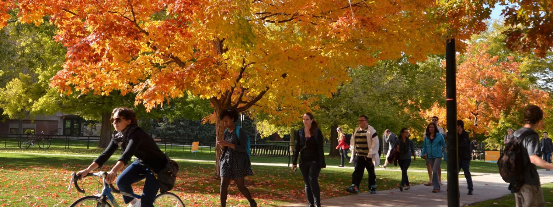 Fall leaves at CU Boulder
