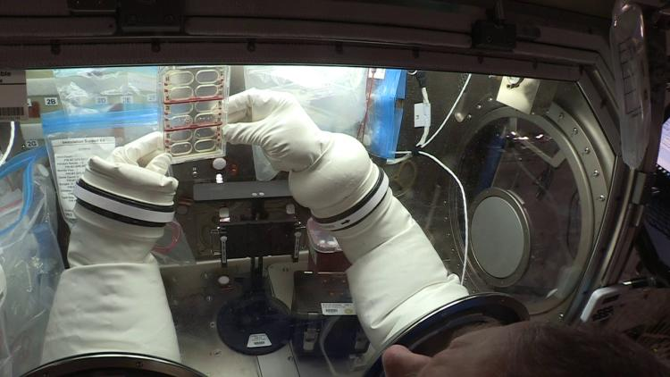 NASA astronaut Scott Tingle preparing a BioCell during the Metabolic Tracking experiment
