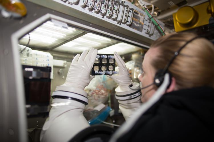 NASA astronaut Kate Rubins inspecting a BioCell in MSG during the Heart Cells experiment