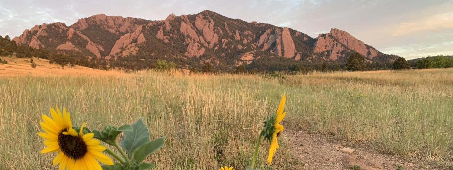 Flatirons Boulder with flowers