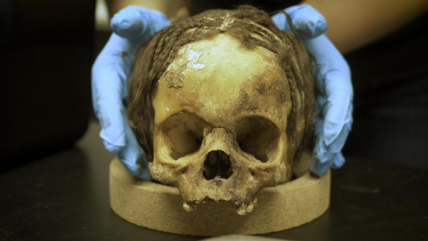 Skull of a 1,300 year-old Nubian mummy with preserved hair braids.